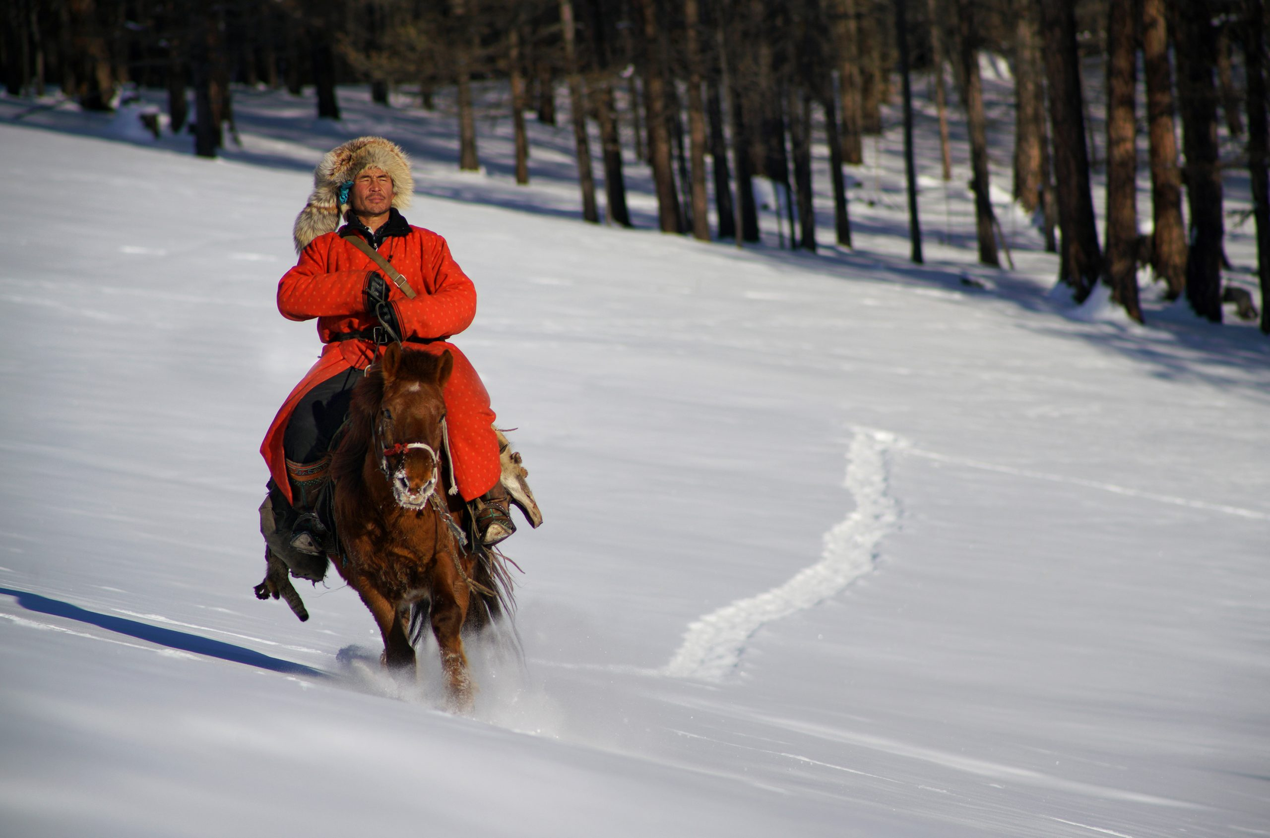 Hüter Der Mongolischen Pferde
